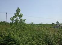 فروش زمین کشاورزی 9000 متر در رضوانشهر در شیپور-عکس کوچک