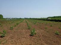 فروش زمین کشاورزی 6310 متر در تالش در شیپور-عکس کوچک