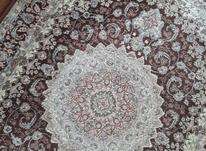 فرش های ابریشم فرحی(بندرانزلی) در شیپور-عکس کوچک
