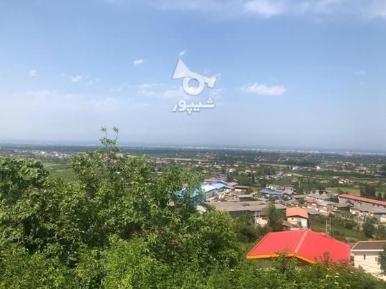 3000 متر تنکابن ارتفاعات سلیمان آباد در گروه خرید و فروش املاک در مازندران در شیپور-عکس1