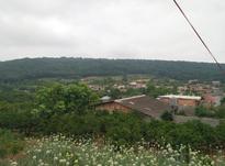 فروش زمین مسکونی 600 متر ساری زرین اباد در شیپور-عکس کوچک
