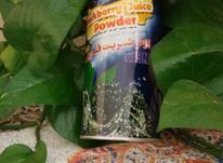 پودر شربت تمشک در شیپور-عکس کوچک