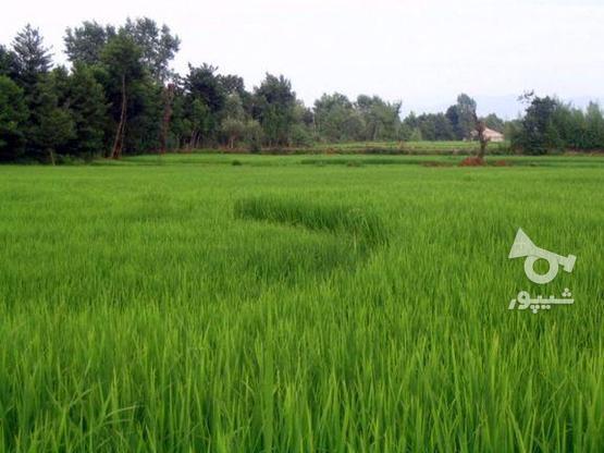فروش زمین کشاورزی 90000 متر در بابلسر در گروه خرید و فروش املاک در مازندران در شیپور-عکس1