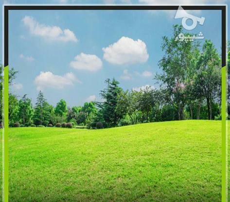 فروش زمین مسکونی 300 متر در محمودآباد در گروه خرید و فروش املاک در مازندران در شیپور-عکس1