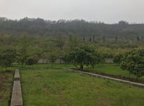 ۳۱۸ متر زمین شهرکی با ویو جنگل در شیپور-عکس کوچک