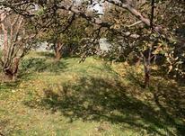فروش زمین مسکونی 500 متر در دماوند در شیپور-عکس کوچک