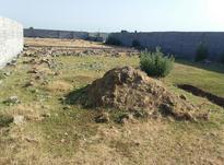 زمین مسکونی 265 متر در نقیب کلا بابلسر در شیپور-عکس کوچک