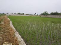 فروش زمین کشاورزی 10000 متر در سرخرود در شیپور-عکس کوچک