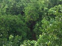 زمین یا باغ  در شیپور-عکس کوچک