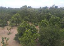 زمین و باغ در شیپور-عکس کوچک