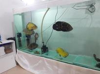فروش آکواریوم با ماهی در شیپور-عکس کوچک