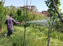 باغبانی و درختکاری و سمپاشی از صفر تا صد با زمانت درهمه شهر  در شیپور-عکس کوچک