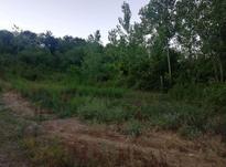 ۲۵۰متر زمین مسکونی با سند در زمیدان در شیپور-عکس کوچک