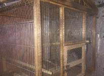 قفس طوطی میشود در شیپور-عکس کوچک