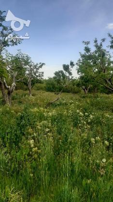فروش زمین کشاورزی 200 متر در دماوند در گروه خرید و فروش املاک در تهران در شیپور-عکس2