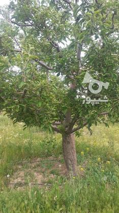 فروش زمین کشاورزی 200 متر در دماوند در گروه خرید و فروش املاک در تهران در شیپور-عکس1