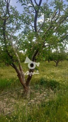 فروش زمین کشاورزی 200 متر در دماوند در گروه خرید و فروش املاک در تهران در شیپور-عکس3