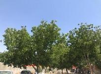 1000متر باغ ویلا در قزوین در شیپور-عکس کوچک
