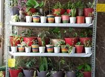 گل و گیاه و تراریوم در شیپور-عکس کوچک