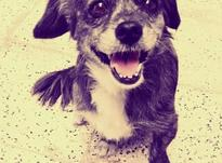 سگ    ماده  در شیپور-عکس کوچک