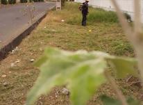 چمن زنی و هرس باغ و ویلا و انواع زمین رشت در شیپور-عکس کوچک