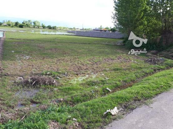زمین با موقعیت عالی در گروه خرید و فروش املاک در گیلان در شیپور-عکس1