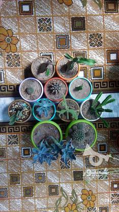 گلدان کاکتوس در گروه خرید و فروش لوازم خانگی در خراسان رضوی در شیپور-عکس1