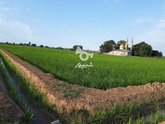 فروش زمین کشاورزی طرح هم سطح سازی ارازی(طرح ژاپن) در گروه خرید و فروش املاک در مازندران در شیپور-عکس1