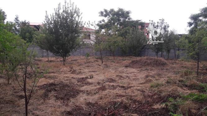فروش باغ قابل ساخت دررویان در گروه خرید و فروش املاک در مازندران در شیپور-عکس1