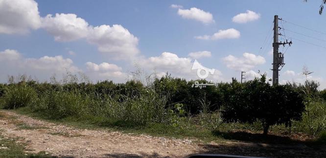 فروش زمین کشاورزی 1000 متر  آکند در گروه خرید و فروش املاک در مازندران در شیپور-عکس1