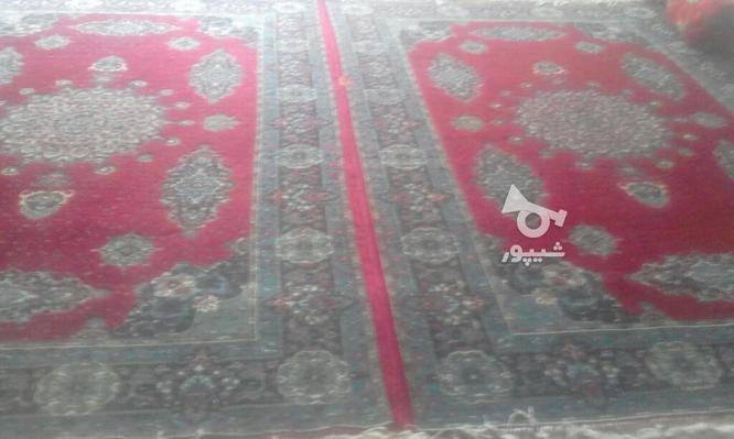 دو عدد فرش شش متری هم رنگ  در گروه خرید و فروش لوازم خانگی در اردبیل در شیپور-عکس1