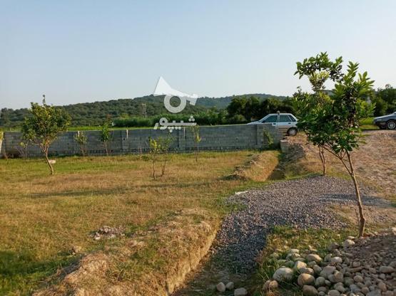 700 متر زمین چسبیده به بافت در گروه خرید و فروش املاک در مازندران در شیپور-عکس1