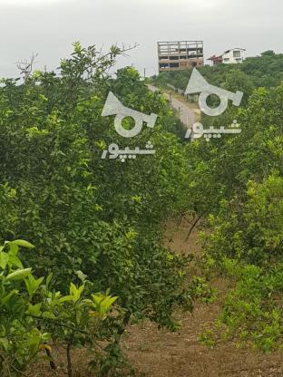 خریدار زمین باغی تا 500متر در گروه خرید و فروش املاک در مازندران در شیپور-عکس1