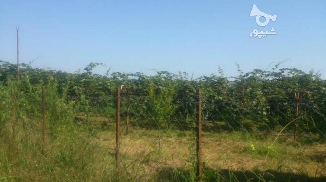 فروش زمین کشاورزی 6000 متر در رضوانشهر در گروه خرید و فروش املاک در گیلان در شیپور-عکس1