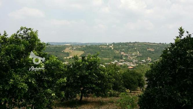 زمین فروشنده واقعی جهت ساخت خانه باغ لاکچری در گروه خرید و فروش املاک در مازندران در شیپور-عکس1