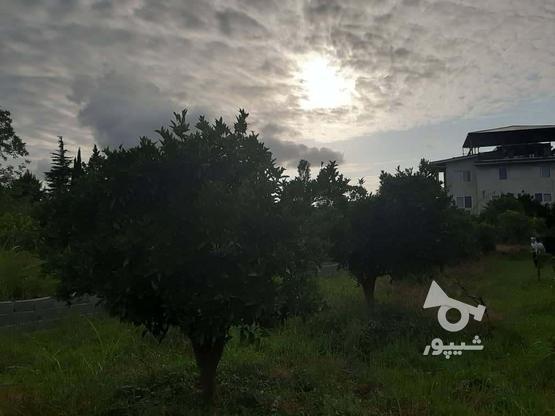 فروش زمین260 متری در نوشهر/مارگیرده در گروه خرید و فروش املاک در مازندران در شیپور-عکس2