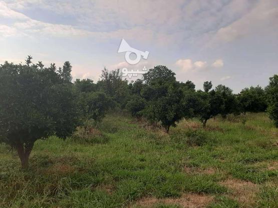 فروش زمین260 متری در نوشهر/مارگیرده در گروه خرید و فروش املاک در مازندران در شیپور-عکس3
