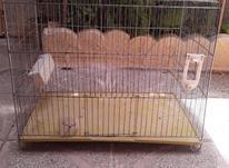 تعدادی قفس پرنده در شیپور-عکس کوچک