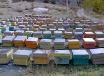 فروش کندو عسل در شیپور-عکس کوچک
