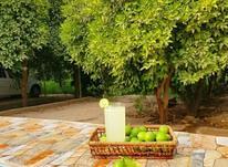 کارشناس حرفه ای باغبانی و کشاورزی  در شیپور-عکس کوچک
