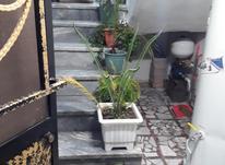 اجاره طبقه اول 75 متر  در شیپور-عکس کوچک
