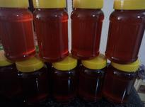 عسل و شیره کاملا طبیعی  در شیپور-عکس کوچک