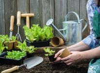 اجرای فضای سبز.باغچه.باغبانی..کاشت چمن در شیپور-عکس کوچک