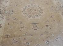 فرش 6متری 500 شانه در شیپور-عکس کوچک