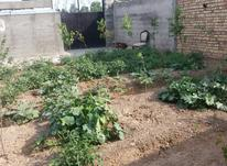 زمین جهت فروش  در شیپور-عکس کوچک