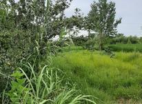 ۲۵۰متر زمین با سندتک برگ قابل ساخت درمنطقه برند جنگلی در شیپور-عکس کوچک