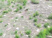 زمین مسکونی ۱۳۰۰۰ متر در کلاردشت  در شیپور-عکس کوچک