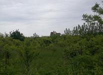 ۱۰۵۰ متر زمین مسکونی زنگشامحله در شیپور-عکس کوچک