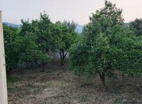 فروش زمین کشاورزی 344 متر  در شیپور-عکس کوچک