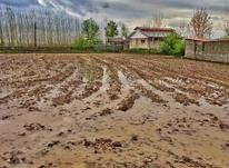 229مترزمین خوش قواره(ویودریاچه)سندتک برگ در شیپور-عکس کوچک